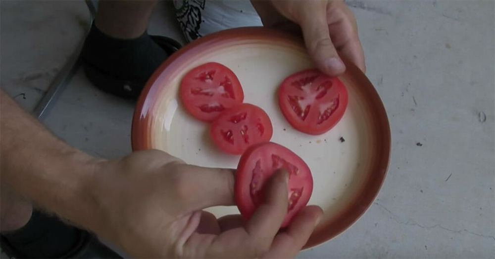 Cà chua chín nẫu đừng vứt đi, hãy thái lát bỏ vào chậu đất, bạn sẽ có cà chua ăn thoải mái - Ảnh 1.