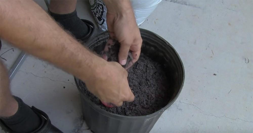 Cà chua chín nẫu đừng vứt đi, hãy thái lát bỏ vào chậu đất, bạn sẽ có cà chua ăn thoải mái - Ảnh 3.