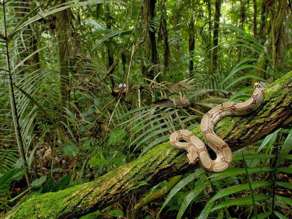 Chuyến thám hiểm nghiệt ngã vào rừng già Amazon: Cả đoàn biến mất, không ai lý giải nổi - Ảnh 2.
