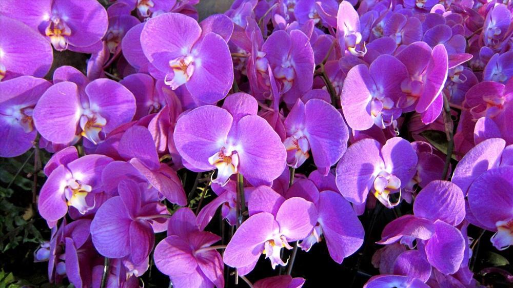 Cực kỳ kiêng kỵ với những loài hoa này trên bàn thờ ngày Tết - Ảnh 2.