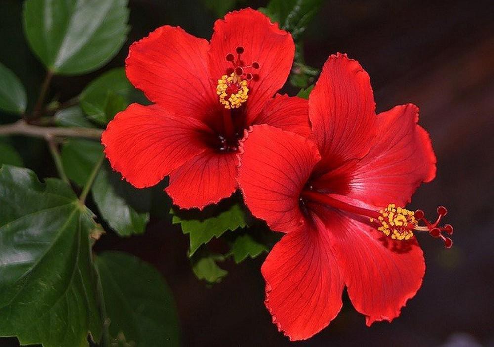 Cực kỳ kiêng kỵ với những loài hoa này trên bàn thờ ngày Tết - Ảnh 6.