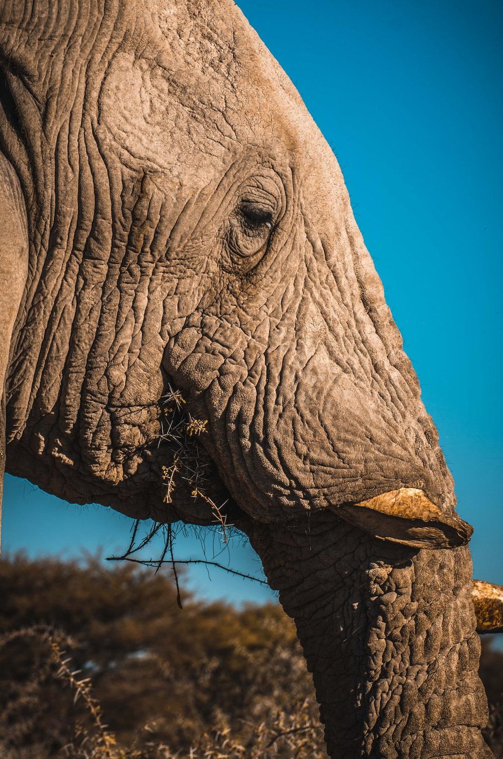 3000 USD đổi lấy 1kg báu vật sống của loài voi: Sự tàn khốc từ lòng tham con người là đây! - Ảnh 2.