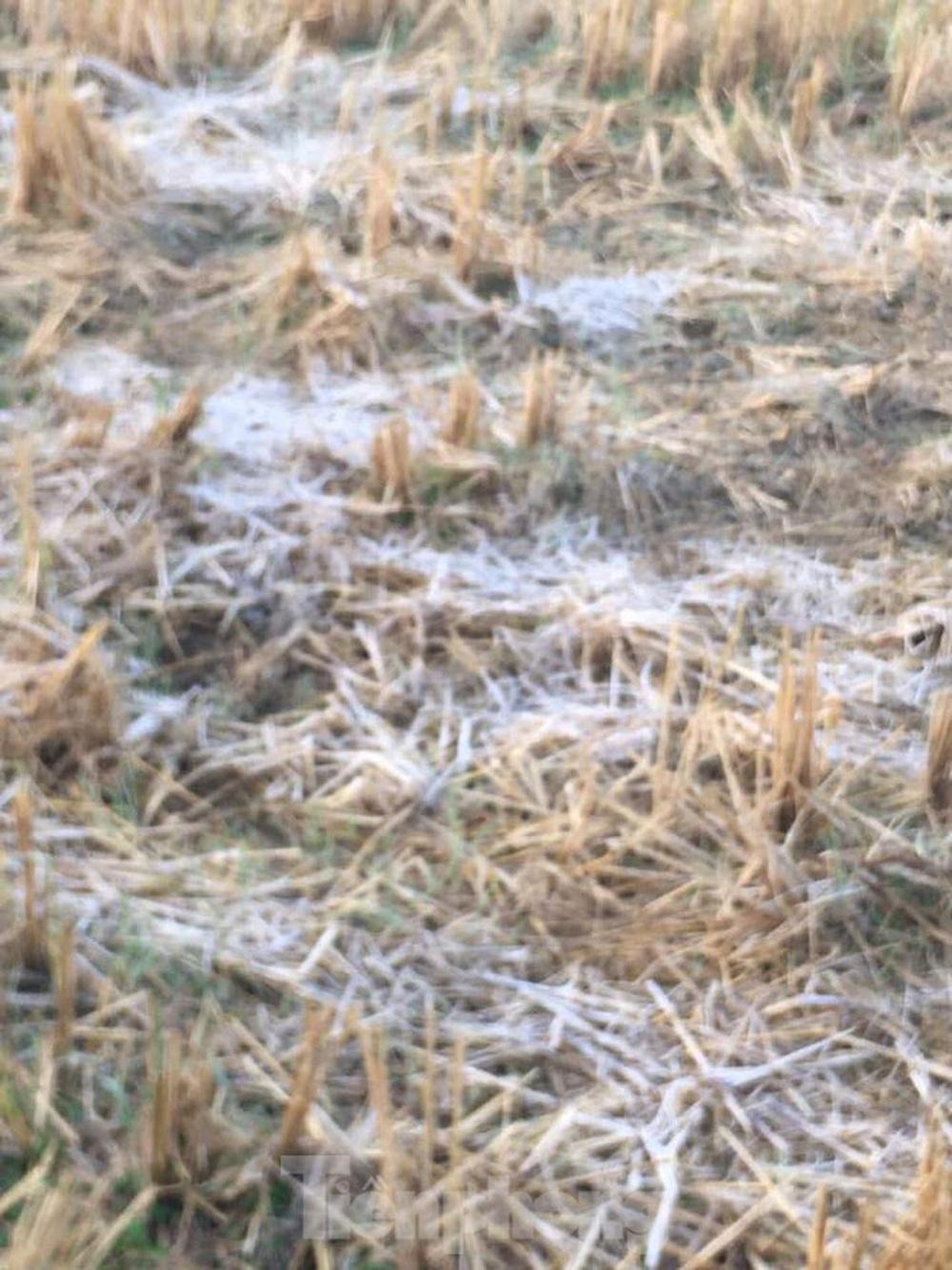 Rét đậm, sương muối phủ trắng cánh đồng và cây cối ở Lạng Sơn - Ảnh 2.