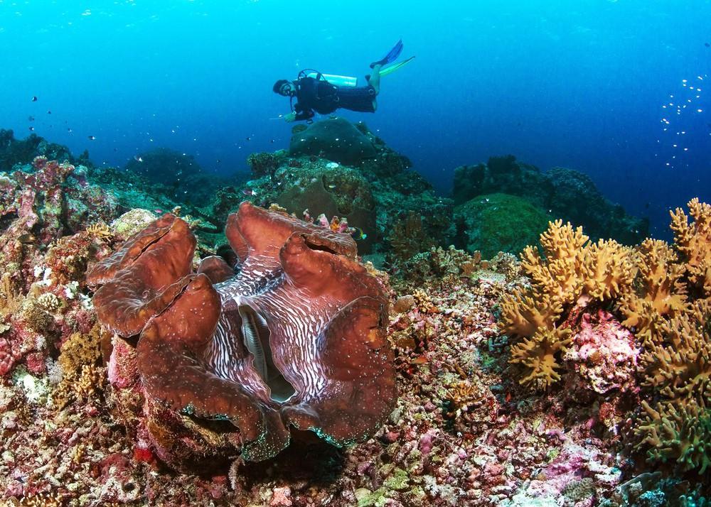 Dân TQ săn lùng báu vật ở Biển Đông bất chấp lệnh cấm, Philippines đe dọa gay gắt - Ảnh 2.