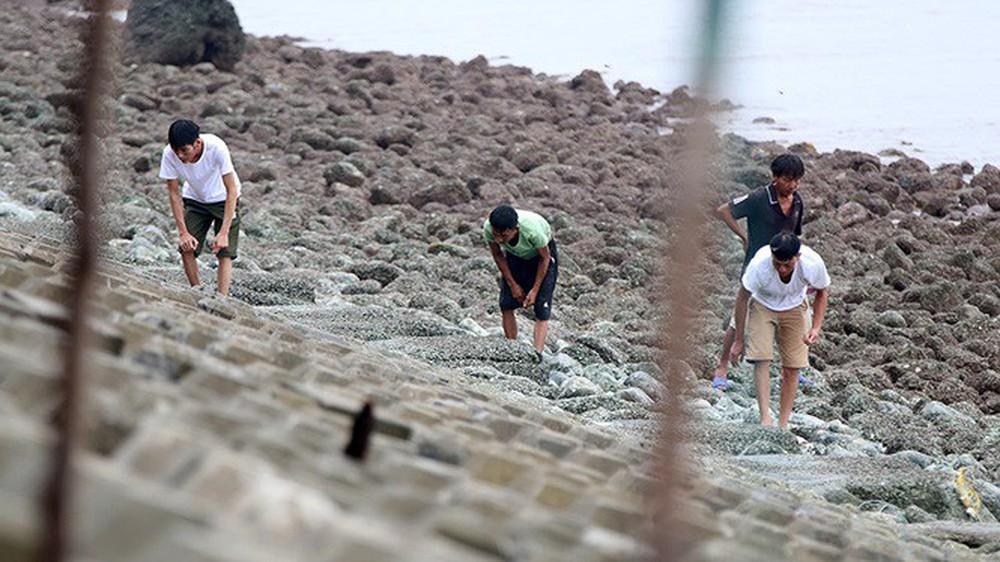 Bão sầm sập ngoài khơi, ngư dân tranh thủ nhặt hải sản trên bờ - Ảnh 2.