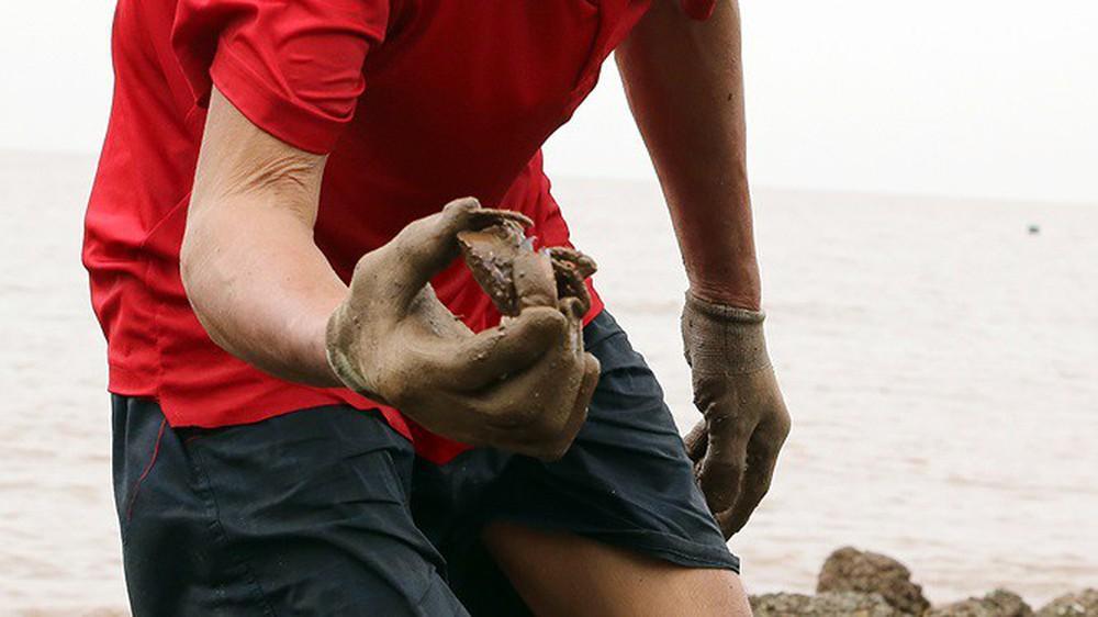 Bão sầm sập ngoài khơi, ngư dân tranh thủ nhặt hải sản trên bờ - Ảnh 5.