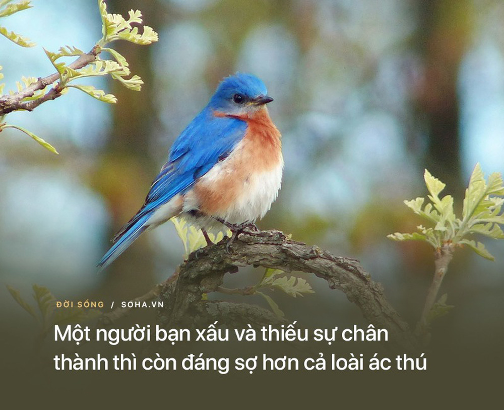 10 bài học từ những lời dạy của Đức Phật: Để không tổn thọ, hãy nhớ kỹ điều số 7 - Ảnh 5.