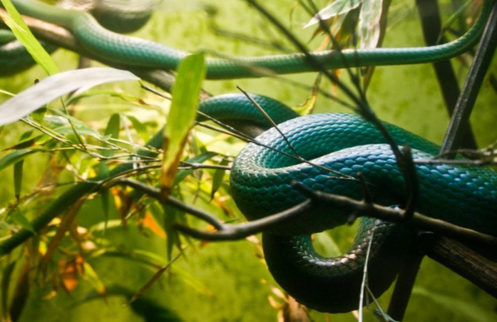 Bò theo cách ngược đời, đuôi đi trước đầu theo sau, con rắn gặp kết cục đủ đau để cảnh tỉnh nhiều người - Ảnh 1.