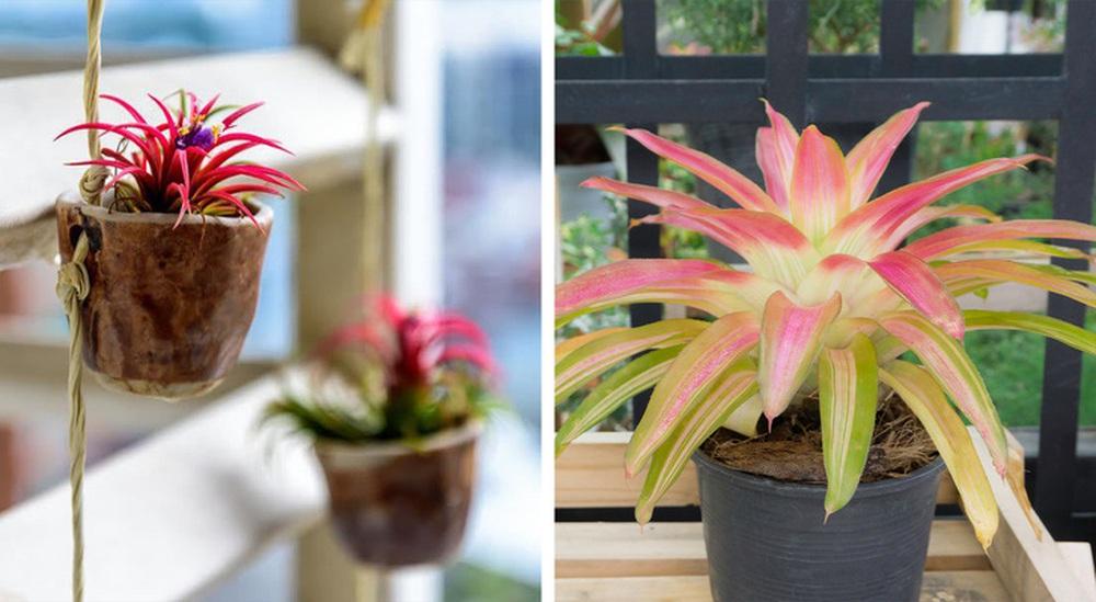 Gợi ý 15 loại cây cảnh bạn nên trồng để vừa làm đẹp nhà vừa tốt cho sức khỏe - Ảnh 12.