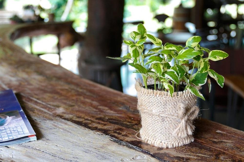 Gợi ý 15 loại cây cảnh bạn nên trồng để vừa làm đẹp nhà vừa tốt cho sức khỏe - Ảnh 10.