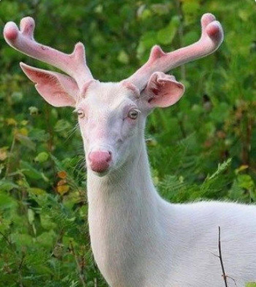 Vẻ đẹp kỳ dị của những động vật bạch tạng trong tự nhiên - Ảnh 10.