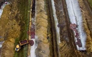 Đan Mạch chôn sống 17 triệu con chồn, giờ lại phải đào lên - ảnh 2