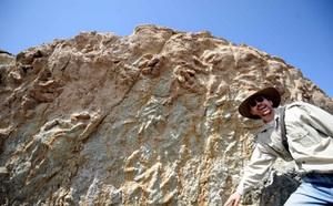 Liệu có thật sự tồn tại loài khủng long cổ đại có bàn tay giống con người? - ảnh 3
