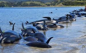 Ngư dân Thái Lan phát hiện khối u nghi là 'bãi nôn cá voi', có giá 74 tỉ đồng - ảnh 4