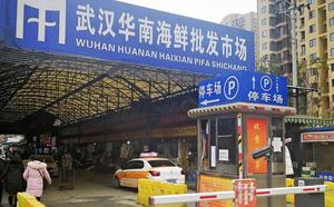 Ba tỷ chuyến đi trong dịp Tết Nguyên Đán: Trung Quốc trước nguy cơ lan truyền virus gây bệnh phổi bí ẩn - ảnh 2