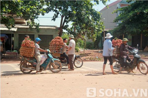 Những người thu mua vải đứng tràn ra hai bên đường chờ những sọt vải được chở tới.