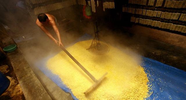 Một người đàn ông đang phơi khôi đậu tương được luộc chín để làm bánh tại một nhà máy ở Medan, Bắc Sumatra, Indonesia.
