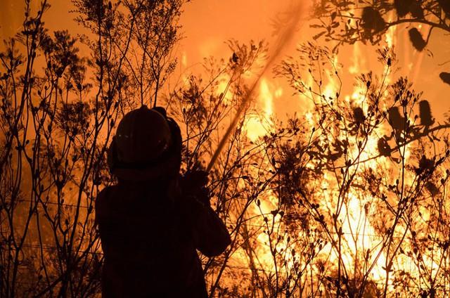 Lính cứu hỏa cố gắng dập tắt cháy rừng ở Bilpin, phía tây thành phố Sydney, Australia.