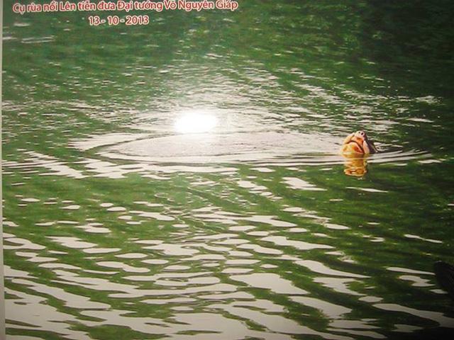 Bức ảnh về cụ Rùa nổi đưa tiễn Đại tướng Võ Nguyên Giáp