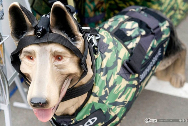 Và ngay cả chó đặc nhiệm cũng được Quân đội Nga thiết kế trang bị cho những bộ quân phục dã chiến cùng các thiết bị đặc chủng đi kèm.