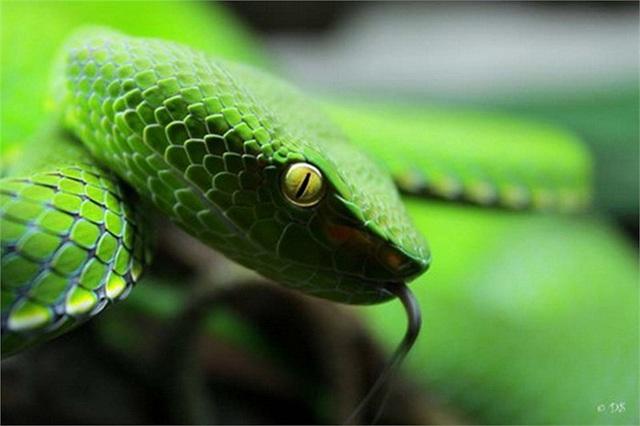 Giải mã giấc mơ thấy rắn xanh đánh con lô gì, đề bao nhiêu? 1492040182
