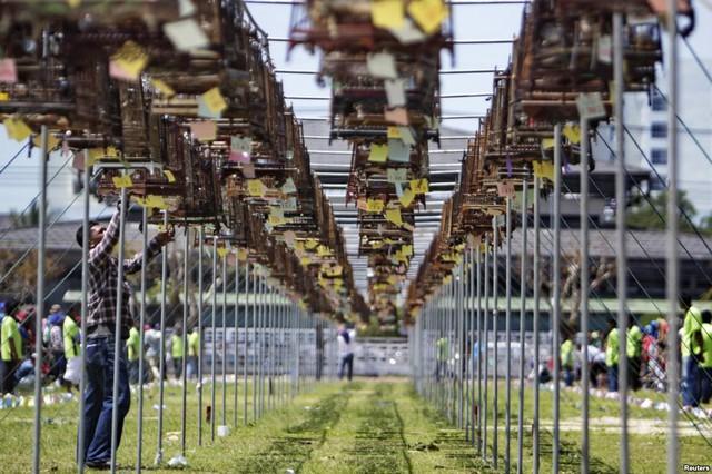 Những người theo đạo Hồi ở Thái Lan chuẩn bị chim và lồng trước cuộc thi chim hót ở tỉnh Yala.