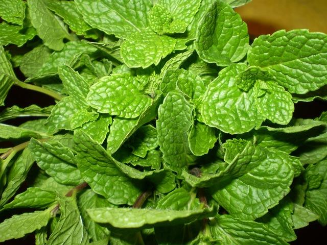 10 loại rau nên thường xuyên có trong nhà đề phòng sự cố sức khỏe 2