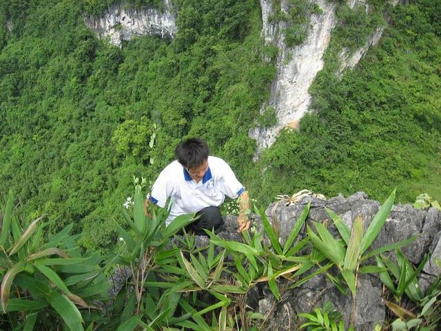 Anh Long ở xã Thông Huề, huyện Trùng Khánh đang hái cây thảo dược mọc ở các hốc đá trên núi