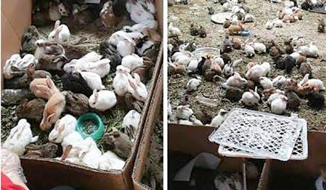 Phát hiện xác hơn 4.000 thú nuôi trong các kiện hàng ở TQ: Nhiều bí mật chấn động được hé lộ - Ảnh 1.