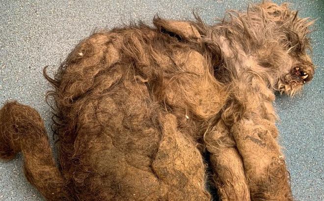Nhận con vật từ tay người phụ nữ, các bác sĩ thú y hoang mang không biết đó là con gì