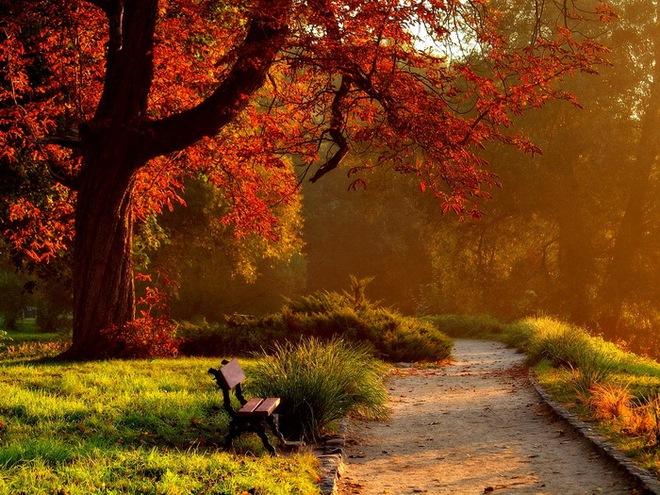 Nếu bị lạc một mình trong công viên giữa đêm tối, bạn sẽ chọn nơi trú ẩn nào? - Đáp án rất thú vị - Ảnh 2.