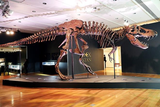 Chiêm ngưỡng một trong những bộ xương khủng long lớn nhất thế giới vừa được bán với mức giá trên trời - Ảnh 1.