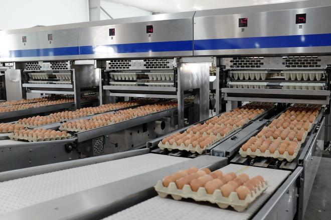 Khi Chủ tịch thép Hòa Phát bán trứng gà: Hơn nửa triệu quả mỗi ngày, lớn nhất miền Bắc - Ảnh 1.