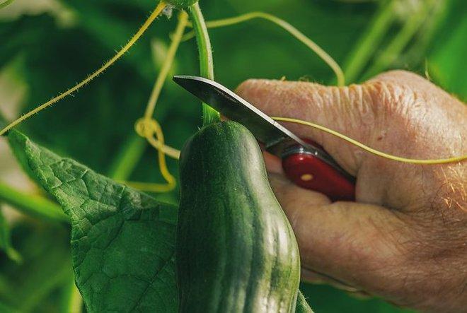 17 mẹo bảo quản giữ thực phẩm tươi ngon lâu hơn: Số 7 nhiều người hay nhầm lẫn - Ảnh 14.