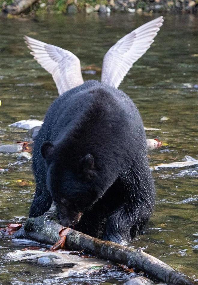 21 lần động vật khiến con người phải phì cười: Con vật trong bức ảnh số 10 quá thông minh - Ảnh 6.