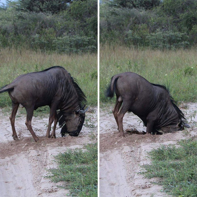 21 lần động vật khiến con người phải phì cười: Con vật trong bức ảnh số 10 quá thông minh - Ảnh 19.