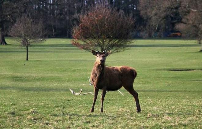21 lần động vật khiến con người phải phì cười: Con vật trong bức ảnh số 10 quá thông minh - Ảnh 21.