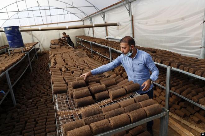 24h qua ảnh: Người đàn ông pha trà trong ngôi nhà ngập lụt ở Việt Nam - Ảnh 7.