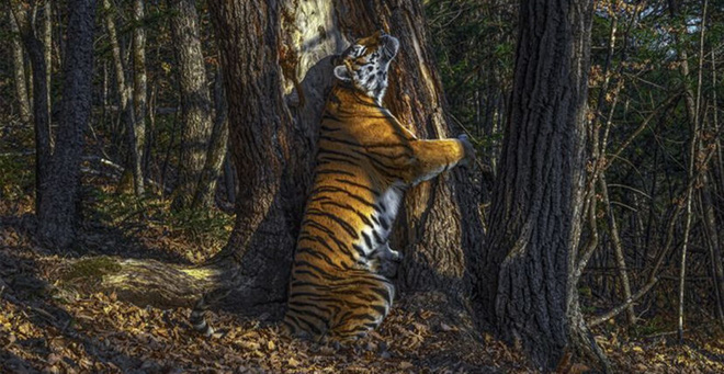 Loạt bức ảnh cuộc sống hoang dã ấn tượng nhất 2020 - Ảnh 1.