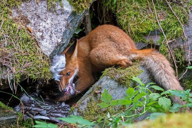 Loạt bức ảnh cuộc sống hoang dã ấn tượng nhất 2020 - Ảnh 2.