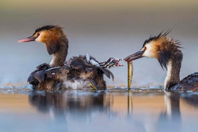 Loạt bức ảnh cuộc sống hoang dã ấn tượng nhất 2020 - Ảnh 9.
