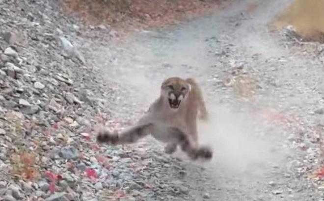 Xem cảnh báo sư tử rình rập con người để biết đâu là sai lầm lớn nhất khi đối mặt với thú dữ