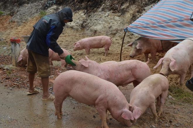 Người dân dầm mưa bên quốc lộ xin cứu trợ, giúp qua cơn đói ở Quảng Bình - Ảnh 4.