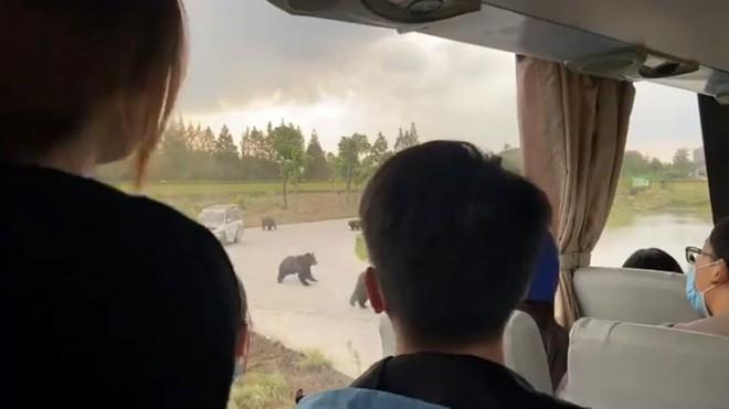 Nhân viên vườn thú bị gấu cắn xé đến chết trước mặt du khách ở Trung Quốc - Ảnh 2.