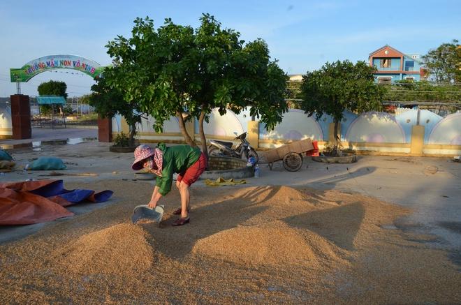 Lũ rút, dân Quảng Bình lao đao vì thóc lúa mọc mầm: Thóc này giờ chỉ phơi cho gà vịt ăn thôi - Ảnh 1.