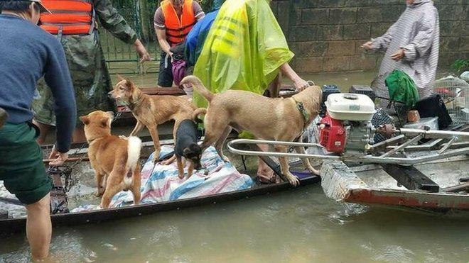 Xúc động hình ảnh người phụ nữ lội trong nước lũ, không quên xách theo chú chó trong chiếc làn nhỏ - Ảnh 5.
