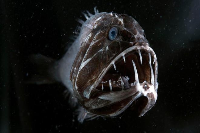 Ẩn sâu dưới đại dương vẫn còn nhiều bí ẩn mà con người chưa khám phá hết.