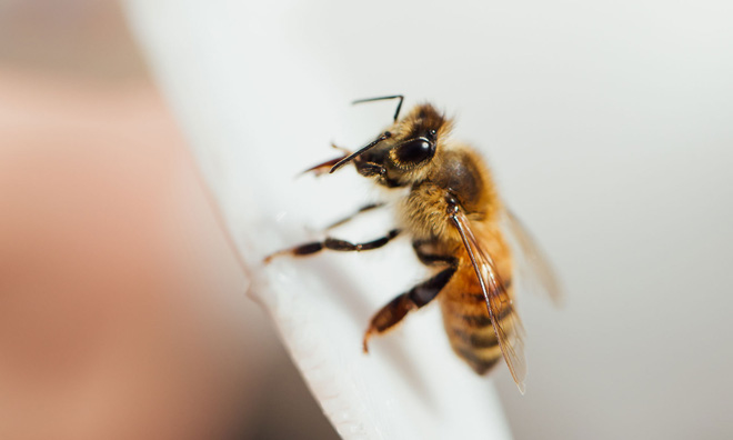 Bí mật toán học đáng kinh ngạc đằng sau tiếng thì thầm của loài ong: Trăm triệu năm vẫn khiến ta bất ngờ - Ảnh 6.