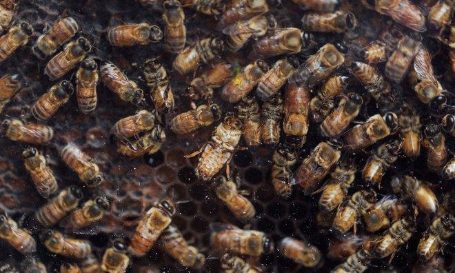 Bí mật toán học đáng kinh ngạc đằng sau tiếng thì thầm của loài ong: Trăm triệu năm vẫn khiến ta bất ngờ - Ảnh 8.