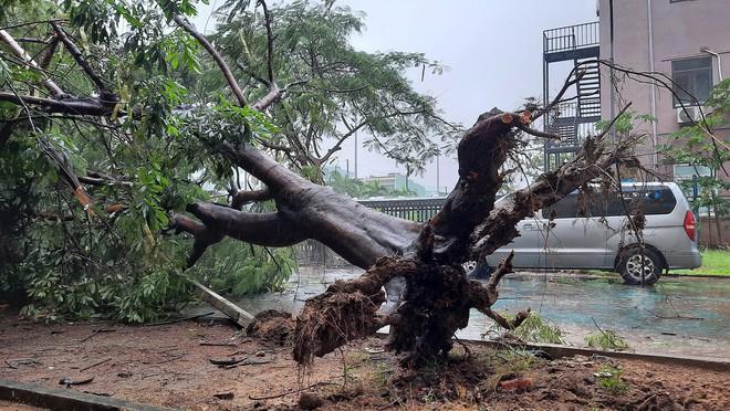 Bão số 9 áp sát, Đà Nẵng mưa to, gió lớn rít lên liên tục; Một số nhà dân và trụ sở các cơ quan chức năng ở Lý Sơn bị tốc mái - Ảnh 1.